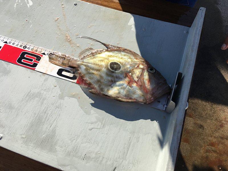 11月4日釣り大会釣果 写真